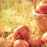 Autumn fruits — Stock Photo #54599707