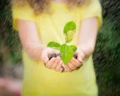 Young plant in hands against green spring background — Stock Photo