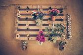 Flowerpot on the wall — Stock Photo