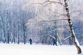 Two unrecognizable persons go on ski along the forest trail — Stock Photo