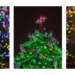 Triptych - Christmas Trees — Stock Photo #58200983