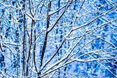 Winter Snow Forest 7 — Stock Photo
