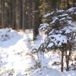 Winter forest scenery - panning up motion — Stock Video #70805867