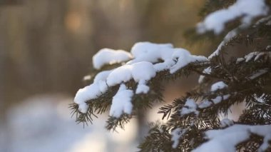 Fir branches with snow — Stock Video