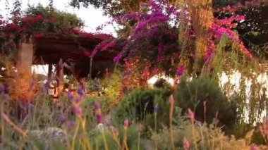 Luxurious hotel garden at sunset — Stock Video