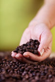 Evaluating the coffee crop — Stock Photo