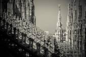 Duomo cathedral of Milan - detail — Stock Photo