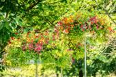 Alternative flowers roof garden — Stock Photo