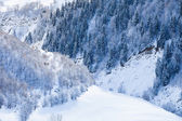 Deciduous and coniferous forest on the snowy slopes — Stock Photo