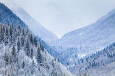 Mountain Valley with coniferous trees covered by snow — Foto Stock