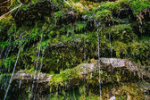 Moss on the rock with water jets — Stock Photo