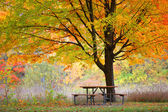 Picnic table and autumn tree — Stock Photo