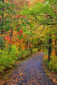 Bike trail through autumn trees — Stock Photo