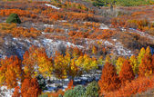 Autumn trees on Mount Sniffles — Stock Photo