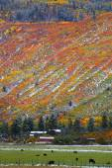 Autumn landscape in Colorado — Stock Photo