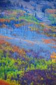 Colorful Aspen trees — Stock Photo