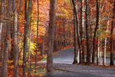 Scenic autumn road — Stock Photo