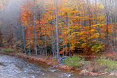 Colorful trees by the river — Stock Photo