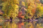 Reflections of Autumn trees — Stock Photo