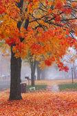 Туманное осеннее время — Стоковое фото