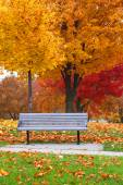 Bench in Fall foliage — Stock Photo