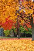 Tunnel of autumn trees — Stockfoto