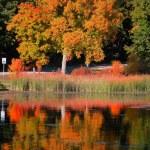 Autumn tree reflections — Stock Photo #56150157