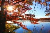 Beautiful autumn morning — Stock Photo