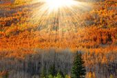 Sun flare over Aspen trees — Stock Photo