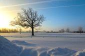 Winter morning — Stock Photo
