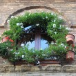 Medieval window with flowers pots — Stock Photo #66234811