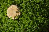 Ceppo di albero sull'erba, vista dall'alto — Foto Stock