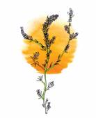 Zelené větve rostlin s květinami a slunce, vektor — Stock vektor