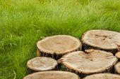 Tree stumps on the grass — Stock Photo