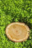 Tree stump on the grass — Stock Photo
