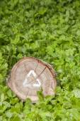 Wooden cut on grass and recycle symbol — Stockfoto