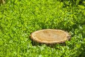 草の上の木の切り株 — ストック写真