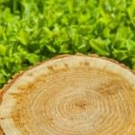 Stump tree on green grass — Stock Photo #70962857