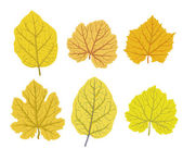 Autumn leaves of trees, vector illustrations set — Stock Vector