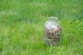 Glass jar with dried clover — Stock Photo