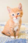 Cute orange kitten sitting on a blue and yellow quilt — Stock Photo