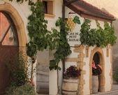 Vine cellar — Stock Photo