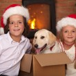 Kids with their new pet at Christmas time — Stock Photo #57808409