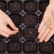 Child hands spreading seeds into germination tray — Stock Photo #67634107