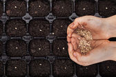 Hands holding spring seeds ready to sow — Stock Photo