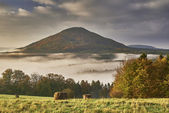 Hilly landscape with fog — Stock Photo