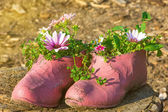 Old painted cracked rubber shoes as a flower pot — Stock Photo