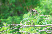 Natural background. Sparrow sitting on a branch of rowan — Stock Photo