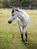 Horse feeding. — Foto Stock