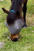Pferd füttern. — Stockfoto